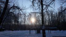 Сказки Битцевского леса