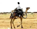 Вело-bash